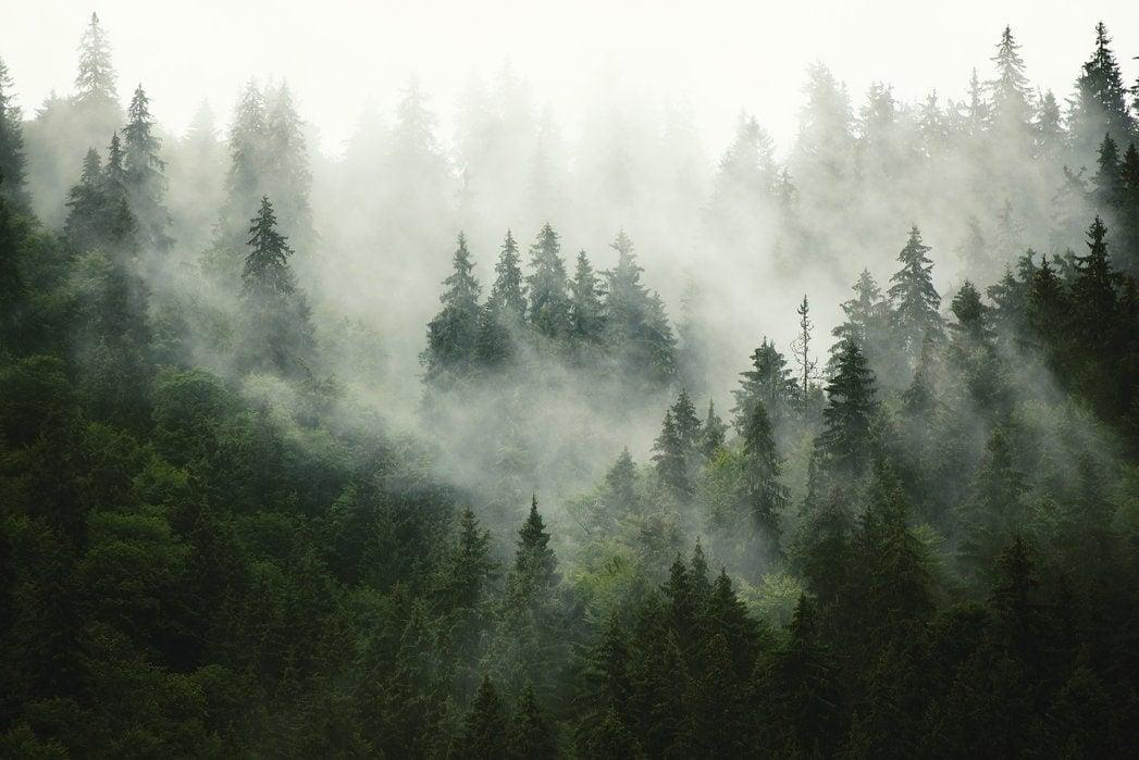 florafilt_forest_fog